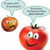 Herbagreen Basic - ingrasamant, biostimulator si fungicid natural oferta Agricultura ecologica