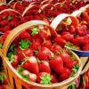 VAND CAPSUNI (MAI-IULIE) SI STOLONI (IN PRIMAVARA) 2013 oferta Fructe