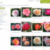 Mii de plante de gradina - accesati www.EutopiaMall.com oferta Flori si plante ornamentale