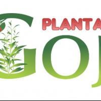 Plante Goji Bio, certificate. oferta Flori si plante ornamentale