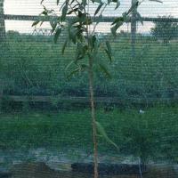 Plante Goji Bio, certificate. oferta Pepiniere
