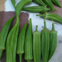 Vand bame proaspete la kg oferta Agricultura ecologica