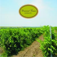 Podgorie Nicoresti vindem struguri pentru vin oferta Vita de vie