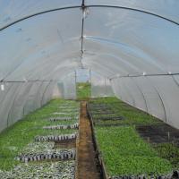 Solarii pentru legume sau flori Poza
