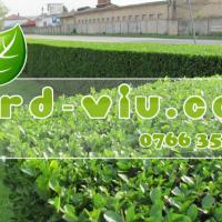 GARD VIU oferta Flori si plante ornamentale