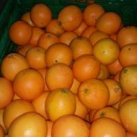 Vand naveline  oferta Fructe