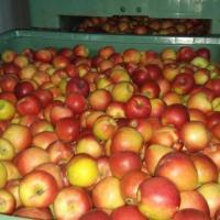 VAND MERE CONSUM EN-GROS oferta Fructe