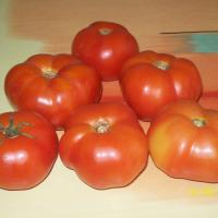 Seminteromanesti-SEMINTE ROSIE DE CAMP (fara arac ) - Plic - 20 Seminte oferta Seminte