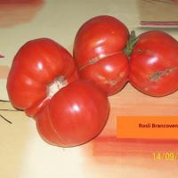 Seminteromanesti- SEMINTE ROSIE BRANCOVENEASCA - Plic 10 seminte . oferta Seminte