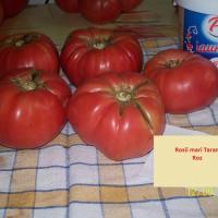 Seminteromanesti -SEMINTE ROSIE MARE ROMANEASCA(roz) - Plic 20 Seminte - oferta Seminte