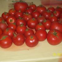 Seminteromanesti- MIXT SEMINTE ROSII - Plic = 100 seminte - oferta Seminte