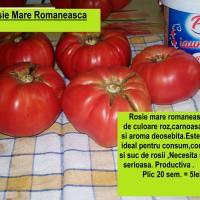 SEMINTE ROMANESTI - Rosie Mare Romaneasca- oferta Seminte