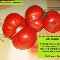 SEMINTE ROMANESTI - Rosie Brancoveneasca -  oferta Seminte