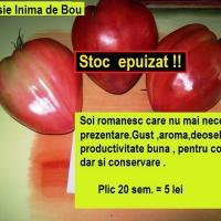 SEMINTE ROMANESTI - Rosie Inima de Bou - oferta Seminte