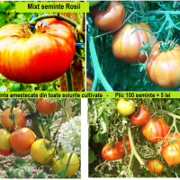 SEMINTE ROMANESTI - Mixt seminte Rosii- oferta Seminte