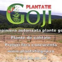 Plante goji de calitate livrate cu certificat de calitate si factura oferta Pepiniere