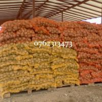 Cartofi samanta alb Riviera, Carrera si Arizona oferta Seminte