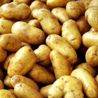 Vand cartofi de toamna, categoria a II-a oferta Legume