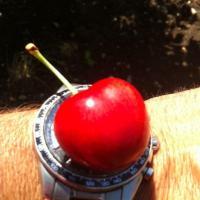 Producator bulgar de Cireșe oferta Fructe