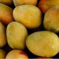 Mango egipt oferta Fructe