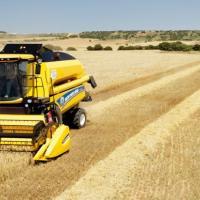 Cumpar Rapita Soia Orz Grau Porumb Floarea Soarelui oferta Cereale & plante tehnice