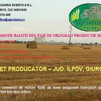 Baloti dreptunghiulari din paie de orz / grau productie 2016 oferta Agricultura ecologica