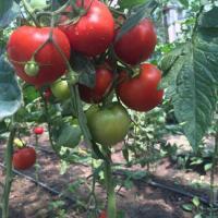 Gradina BIO oferta Agricultura ecologica