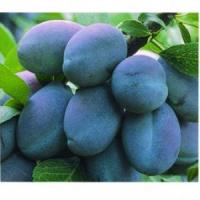 Vand prune pt. masa si tuica oferta Fructe