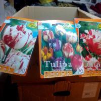 Bulbi de flori si butasi de trandafir oferta Flori si plante ornamentale
