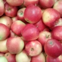 Mere 2016 oferta Fructe