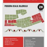 Societate comercială vinde struguri nobili de vin, soiuri albe și roșii cu certificate IG și DOC. oferta Vita de vie