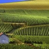 struguri vin oferta Vita de vie