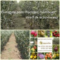 Pomi fructiferi de calitate. oferta Pepiniere