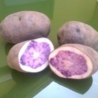 cartofi mov de Congo oferta Legume