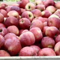 Vând mere diferite soiuri calitate deosebită oferta Fructe