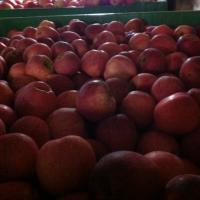 Vand mere pentru suc si consum din livada MERITABIO -Cheresig Bihor oferta Fructe
