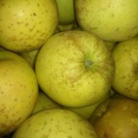 Vand mere Golden - toate soiurile, calitatea I, II si II oferta Fructe