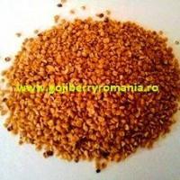 Seminte si plante Goji NQ1 oferta Material saditor