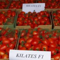 Seminte de tomate KILATES F1 oferta Seminte