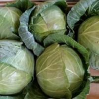 Toate legumele Poza
