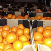 CLEMENTINE DIN SPANIA oferta Fructe
