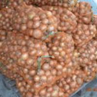 Seminte de ceapa , soi  Holtedon , Rep.Moldova oferta Seminte