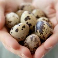 Vindem oua de incubatie, prepelite si pui de prepelita Poza