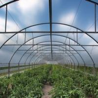 Folie profesionala pentru sere si solarii oferta Legume
