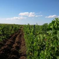 vita de vie 4.57 hectare oferta Vita de vie