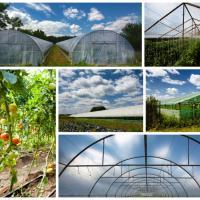 Folie profesionala pentru agricultura oferta Legume