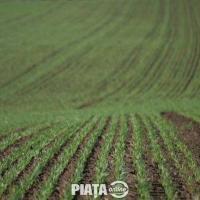 Vanzare teren agricol Constanta 3000 ha Poza