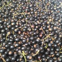 coacaze negre oferta Fructe