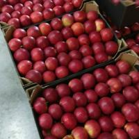 Mere Polonia oferta Fructe