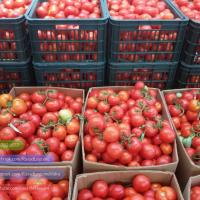 Rasad rosii castraveti ardei vinete alte rasaduri legume oferta Legume